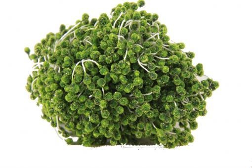 Тычинка с блестками  0,5 см 850 шт зеленая