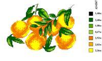 Набор вышивки нитками А5 037 Апельсинки